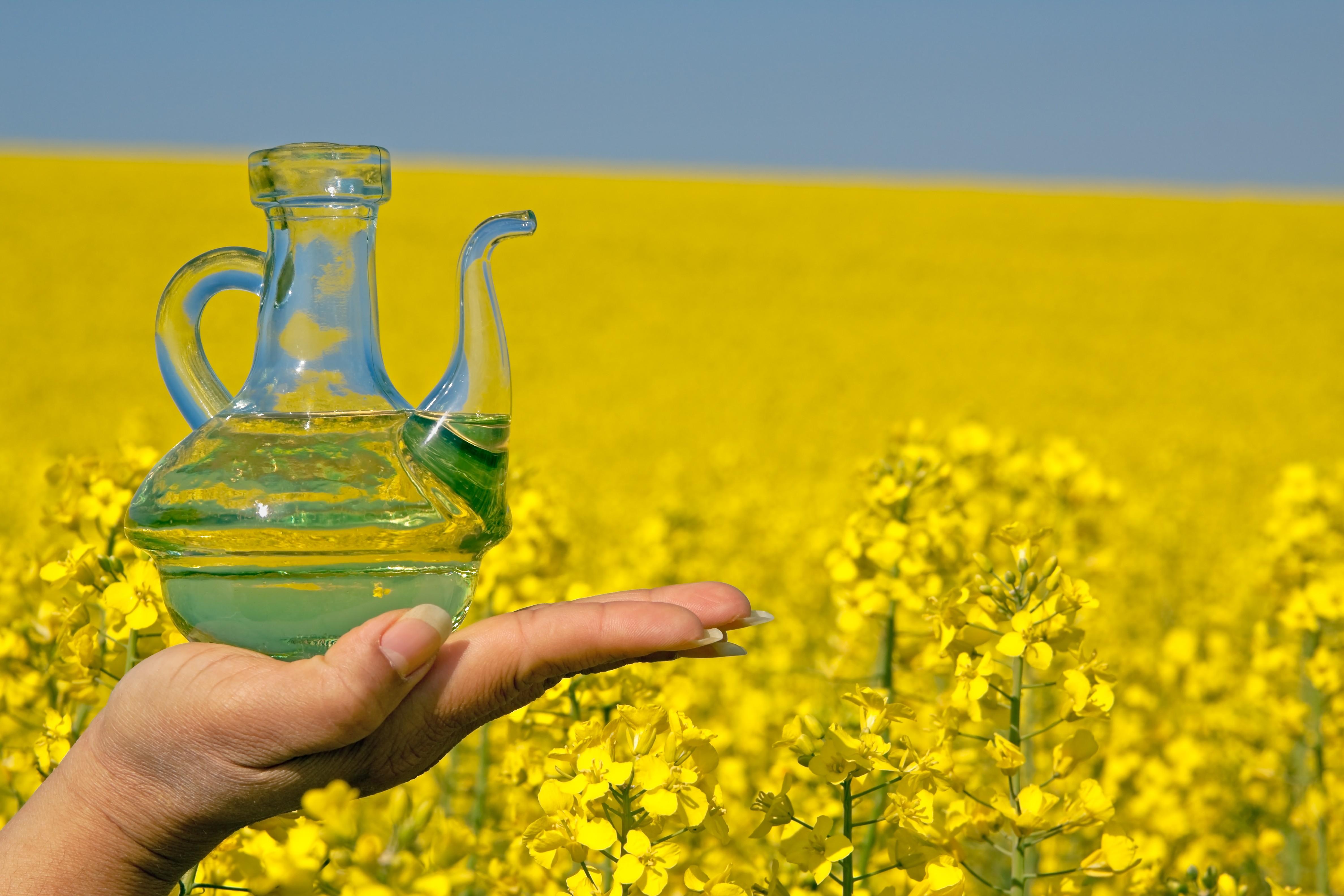 Zastosowanie oleju rzepakowego w diecie dra. Ornisha